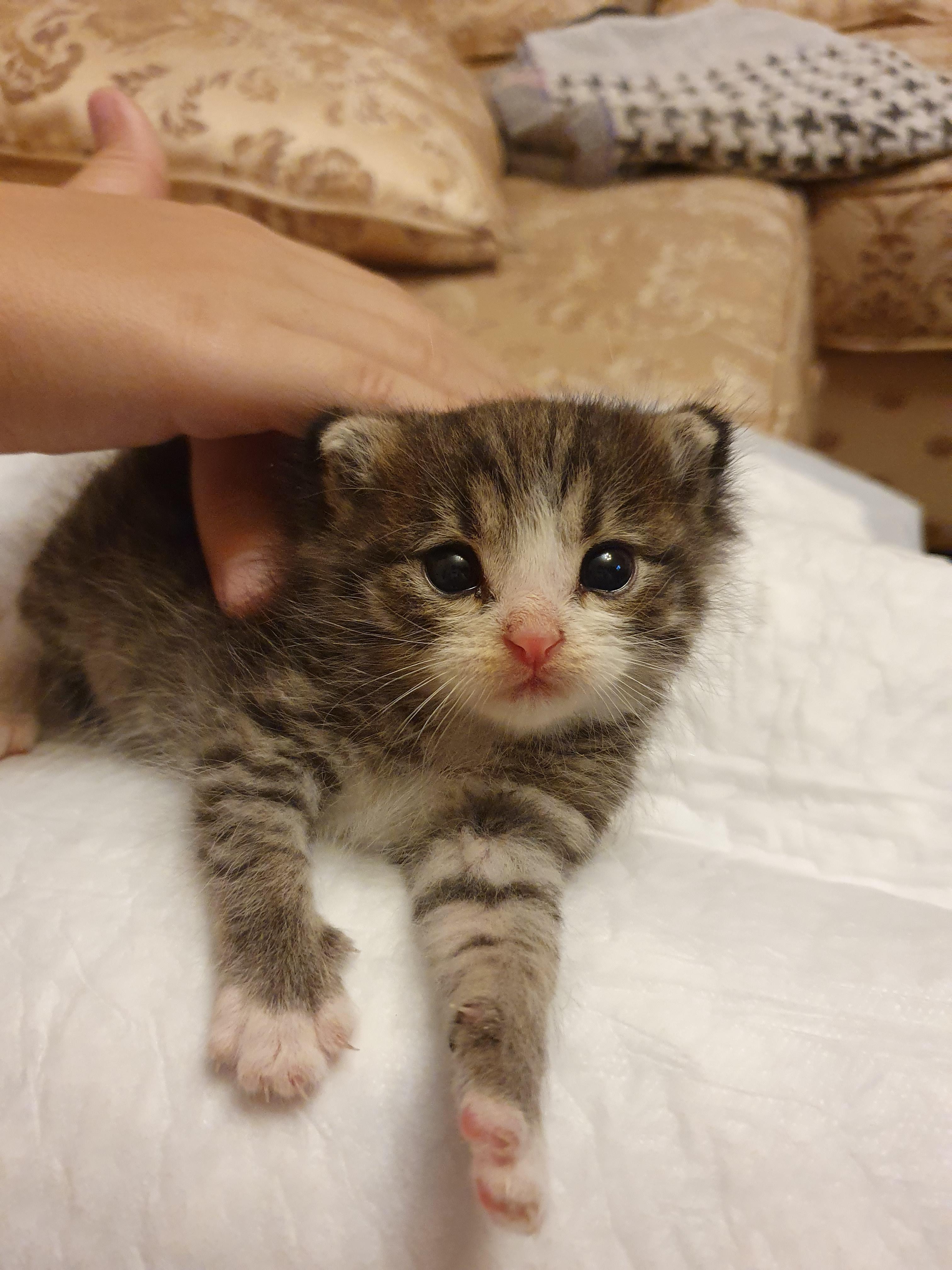 слегка обняла двухнедельные котята фото этот раз