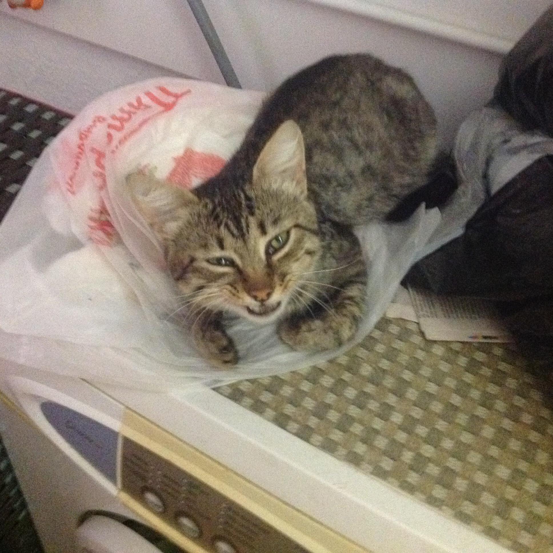 Мой Кот Резко Похудел. Почему кошка стала худеть, если ест плохо или хорошо, что это может быть: причины потери веса