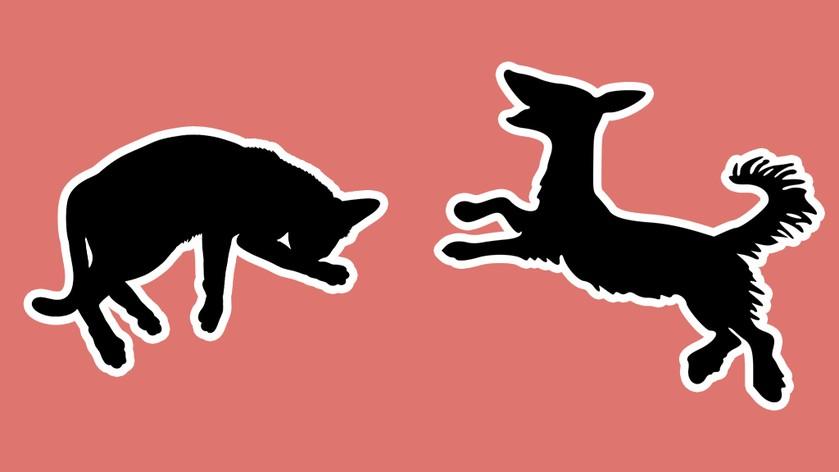 Топ-5 открытий «британских» ученых о кошках и собаках