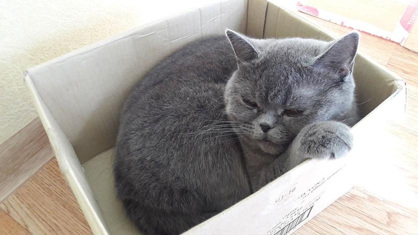 Как выбрать стерилизацию кошек
