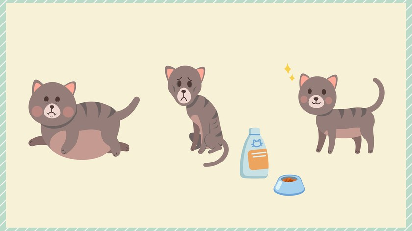 как вытравит глисты у кошки