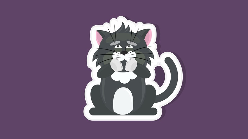 утренняя рвота у кота