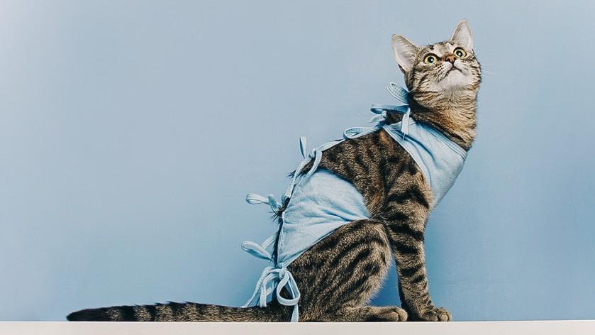 что будет если не кастрировать домашнего кота